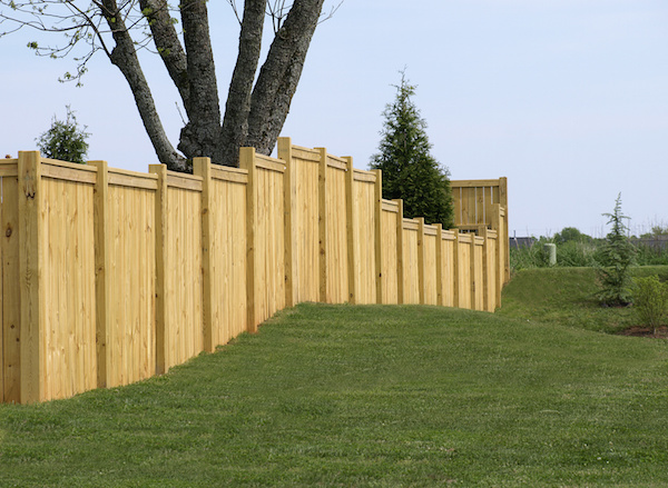 Professional Tips to Maintain Your Fences